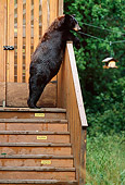 BEA 08 TL0017 01