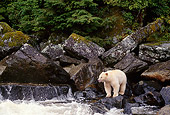 BEA 08 TL0019 01