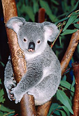 BEA 10 RK0001 18