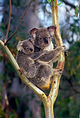BEA 10 KH0001 01