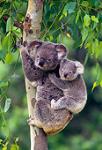 BEA 10 KH0003 01