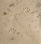 BKD 01 RK0010 01
