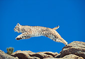 BOB 01 GL0002 01