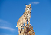 BOB 01 GL0003 01