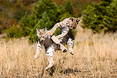 BOB 01 MC0001 01