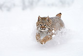 BOB 01 WF0001 01
