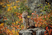 BOB 01 DB0001 01