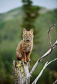BOB 01 DB0002 01