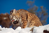 BOB 01 RK0002 07