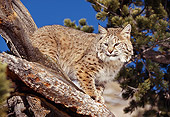 BOB 01 RK0010 23