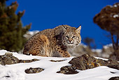 BOB 01 RK0016 02
