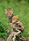 BOB 01 RW0001 01