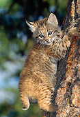 BOB 01 TK0001 01