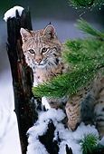 BOB 01 TL0004 01