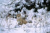 BOB 01 TL0007 01