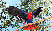 BRD 01 GL0003 01