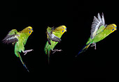 BRD 01 GL0008 01
