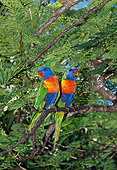 BRD 01 GL0015 01