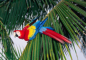 BRD 01 GL0018 01