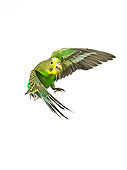 BRD 01 JE0004 01