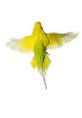 BRD 01 JE0007 01