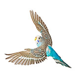 BRD 01 JE0009 01
