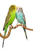 BRD 01 JE0011 01