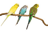 BRD 01 JE0012 01