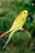 BRD 01 JE0017 01