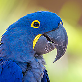 BRD 01 KH0034 01