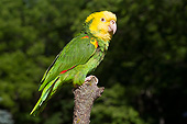 BRD 01 LS0015 01