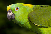 BRD 01 LS0019 01