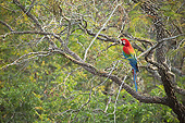 BRD 01 MC0002 01