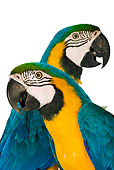 BRD 01 MH0003 01