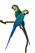 BRD 01 MH0005 01
