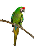 BRD 01 MH0007 01