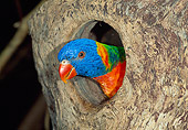 BRD 01 MH0015 01
