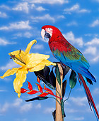 BRD 01 RK0010 05