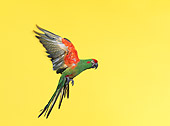 BRD 01 RK0025 01