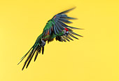 BRD 01 RK0025 03