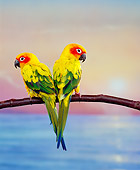 BRD 01 RK0050 09