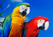 BRD 01 RK0075 06