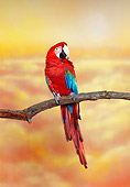 BRD 01 RK0096 02