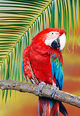 BRD 01 RK0103 06