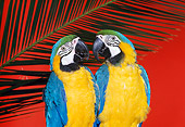 BRD 01 RK0120 10