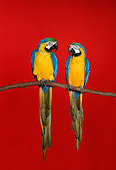 BRD 01 RK0124 05