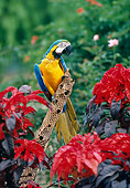 BRD 01 RK0153 19