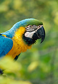BRD 01 RK0162 01