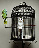 BRD 01 RK0178 01