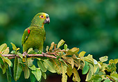BRD 01 WF0004 01